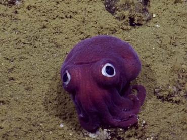 Encuentran una especie de molusco de mirada expresiva
