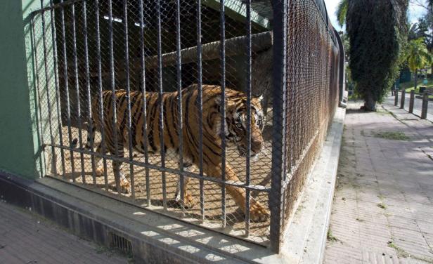 Animales del zoo Villa Dolores irán a la reserva Tálice de Flores