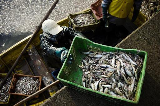 Mercurio, aflatoxinas y salmonella entre los mayores riesgos alimentarios