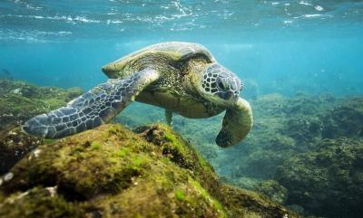Obama creó en Hawai la mayor área protegida del mundo