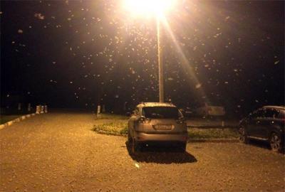 'Nieve' de polillas invade región rusa