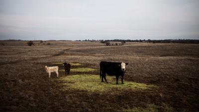 Los verdaderos dueños de EE.UU.: Estos son los diez mayores terratenientes