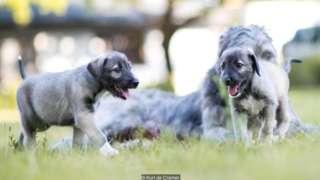 La tierna historia de los primeros gemelos idénticos de perro que se conocen