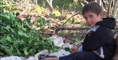 Documental destapa trabajo infantil en los campos de yerba mate en Argentina
