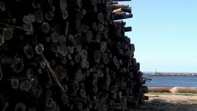 UPM suspendió traslado de madera por puerto de La Paloma y 500 camiones volverán a las rutas