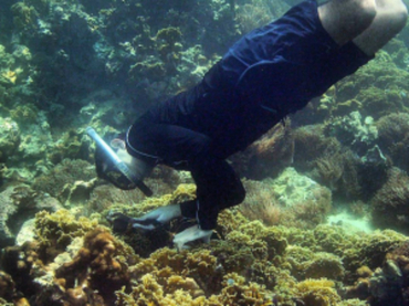Biólogo venezolano descubre una nueva especie marina