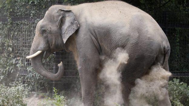3 fascinantes hábitos de los animales que quizás no conocías